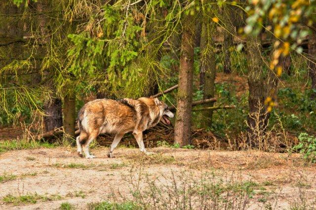 10-2009_Groß-Schönebeck-Wildpark-Schorfheide_039_lzn-4
